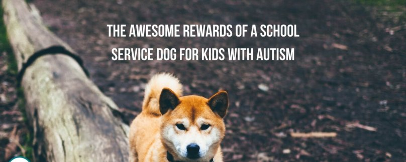 The Awesome Rewards of a School Service Dog for Kids with Autism
