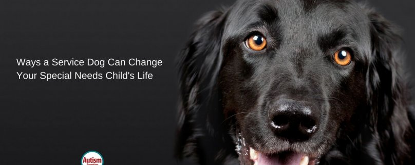 Ways a Service Dog Can Change Your Special Needs Child's Life