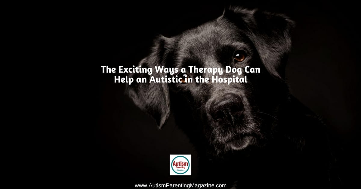 Ways therapy dog can help autisticm