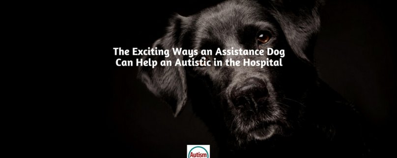 The Exciting Ways an Assistance Dog Can Help an Autistic in the Hospital