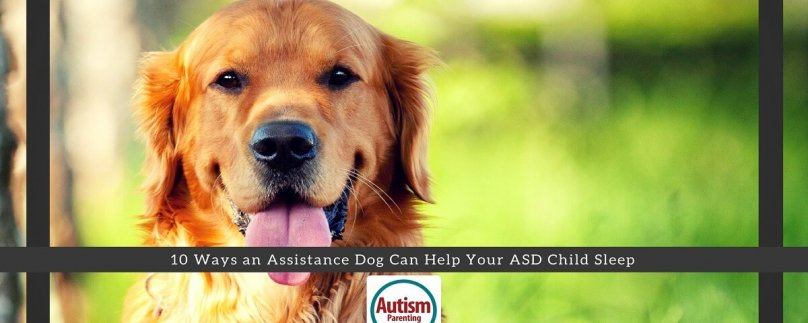 10 Ways an Assistance Dog Can Help Your ASD Child Sleep