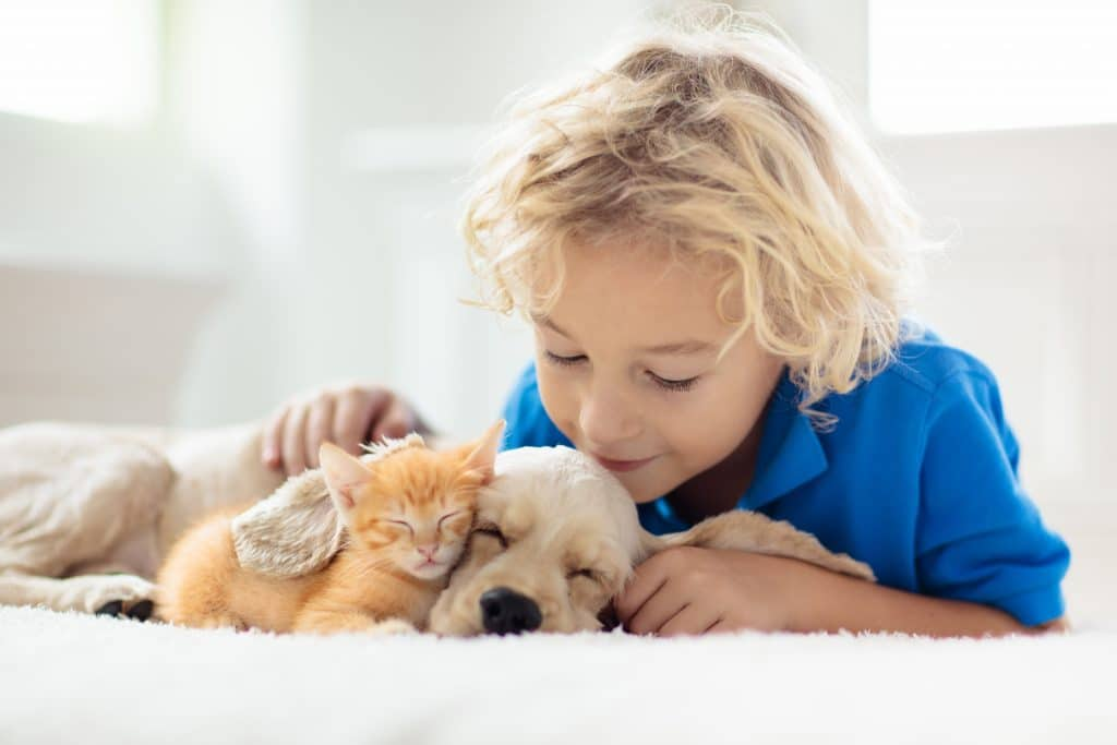 Kid play with puppy and kitten
