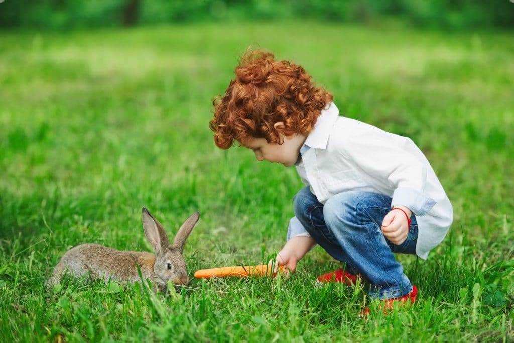 little boy feeding rabbit with carrot in park